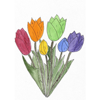 Regenbogen Tulpen